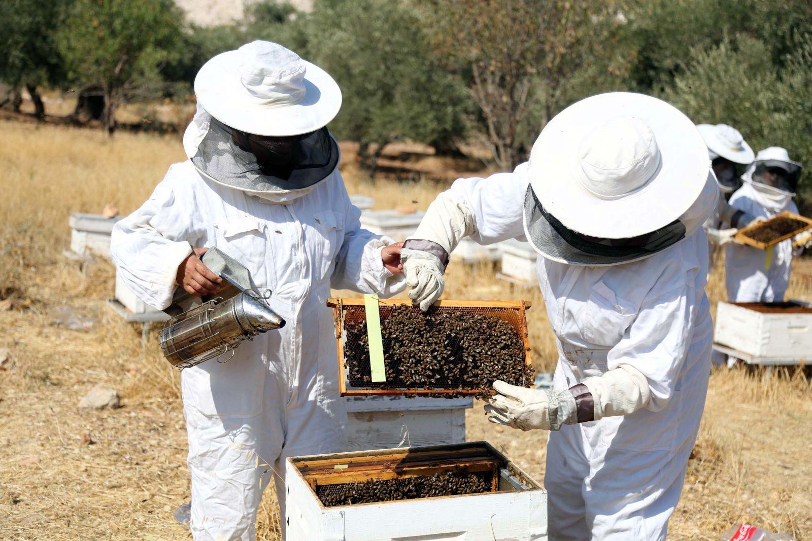 بالصور تربية النحل , تعلم كيف تقوم بتربيه النحل 6093 2