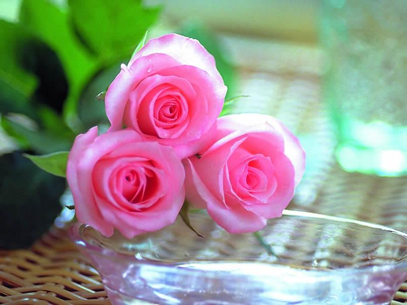 بالصور شعر عن الورد , اجمل كلام يقال عن الورد 6109 7