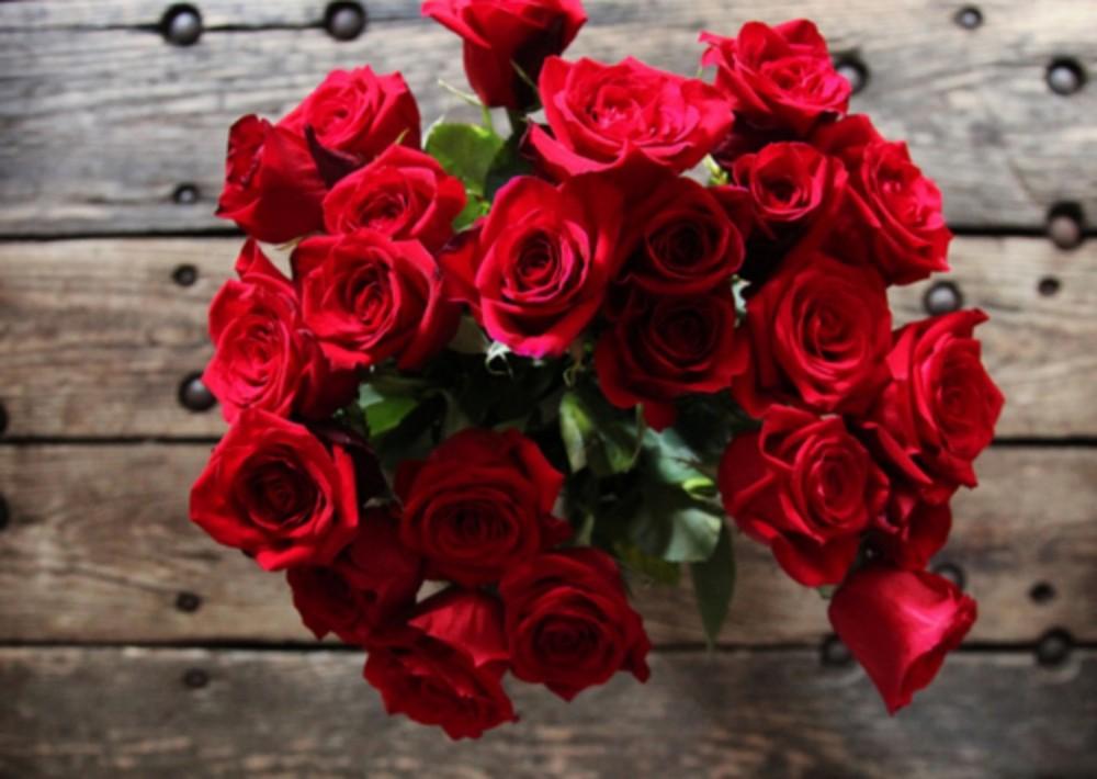 بالصور شعر عن الورد , اجمل كلام يقال عن الورد 6109 9