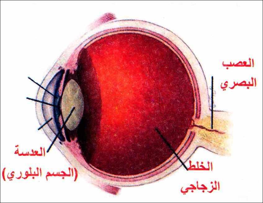 بالصور مكونات العين , ماهى مكونات العين 6190 1