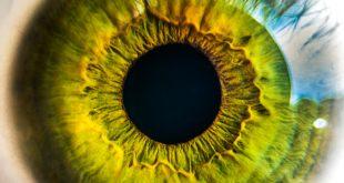 مكونات العين , ماهى مكونات العين
