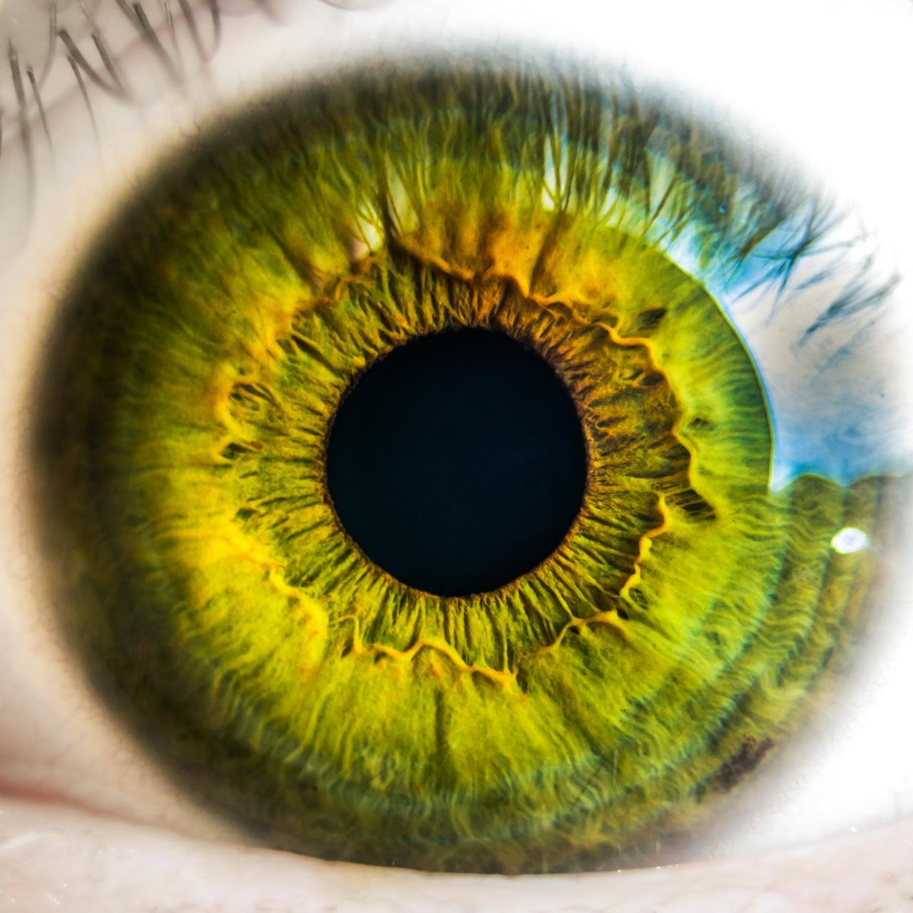 بالصور مكونات العين , ماهى مكونات العين 6190