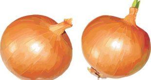 صوره فوائد البصل , القيمة الغذائية للبصل