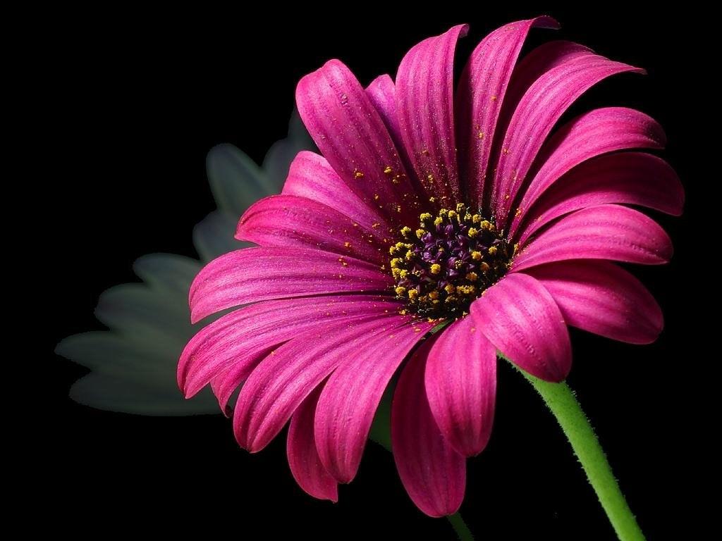 صورة تنزيل صور ورد , تحميل اجمل صور الورد والازهار