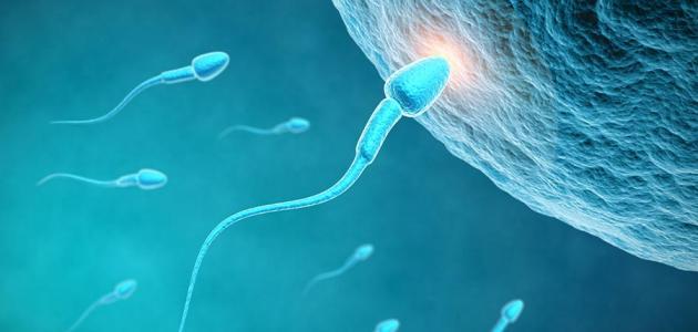 صوره كيف اصبح حامل , لكي اصبح حامل