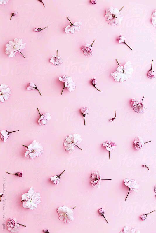 وردية زهرية خلفيات بوربوينت