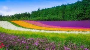 بالصور خلفيات طبيعة , صور الطبيعة الخلابه 2307 2