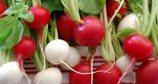 فوائد الفجل , القيمة الغذائية للفجل المدهش