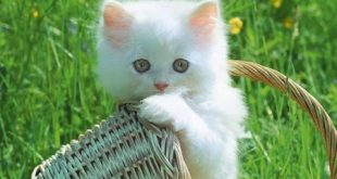 صوره خلفيات قطط , صور لاجمل القطط الصغيرة والنادرة