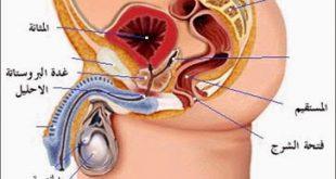 علاج البروستاتا , الامراض التى تصيب الرجل