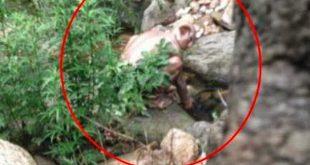 صورة صور ياجوج وماجوج , علامات يوم القيامة 4154 12 310x165