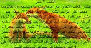 صوره معلومات عن الحيوانات , معلومات رائعة عن الحيوانات