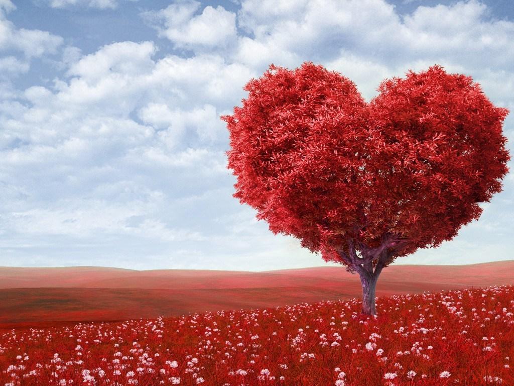 صورة كلمات للحبيب رومانسيه , اجمل كلمات الحب والرومانسية الجاذبة للحبيب 5325 8
