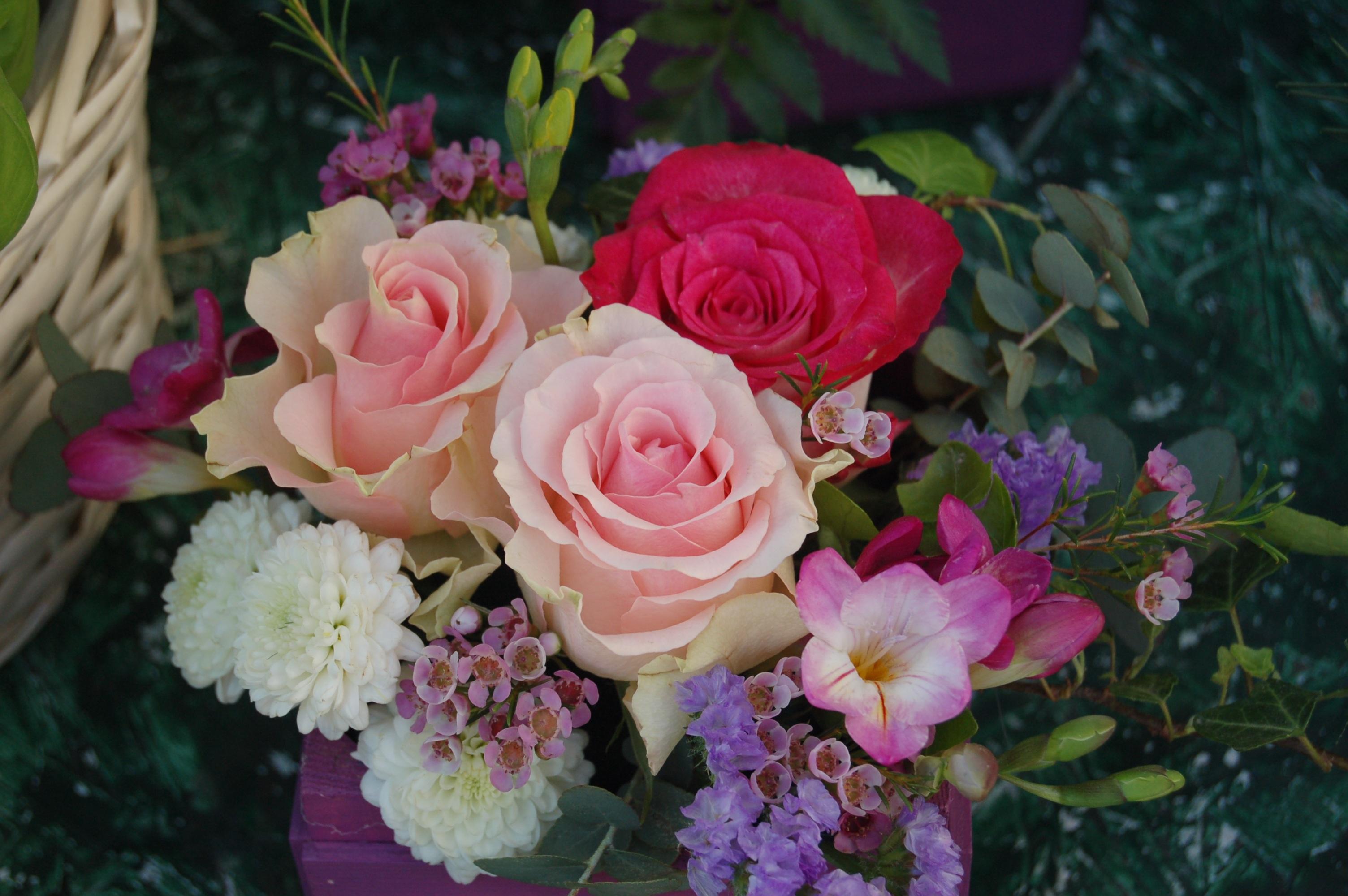 صورة صور ورود جميلة , صور اجمل الورود والازهار الجميلة