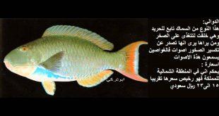 صوره معلومات عن الاسماك , معلومات هامة عن انواع الاسماك