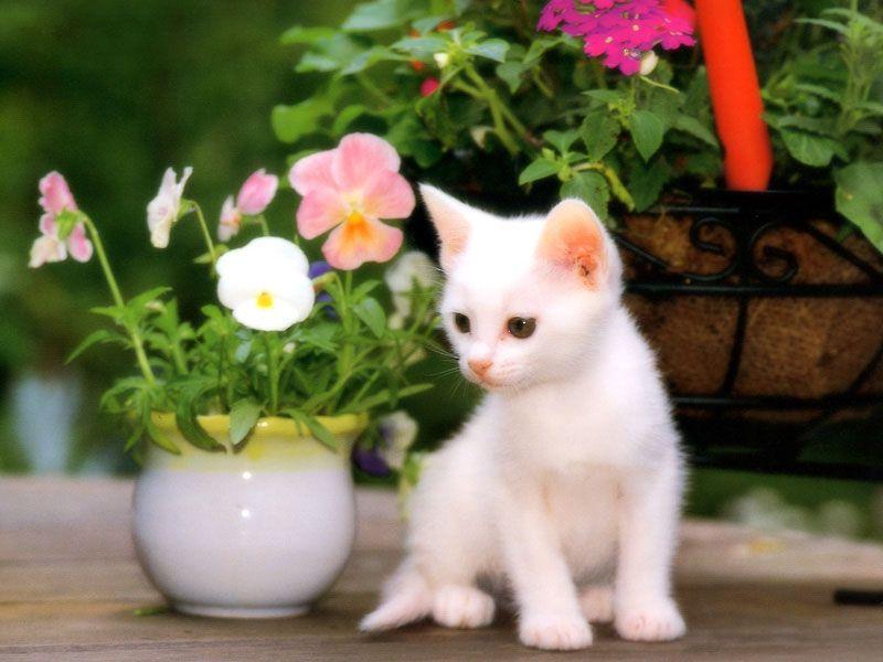 صور صور قطط صغيرة , صور جميلة ومرحة للقطط الصغيرة