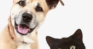 صور قطط وكلاب , صور ومعلومات عن القطط والكلاب