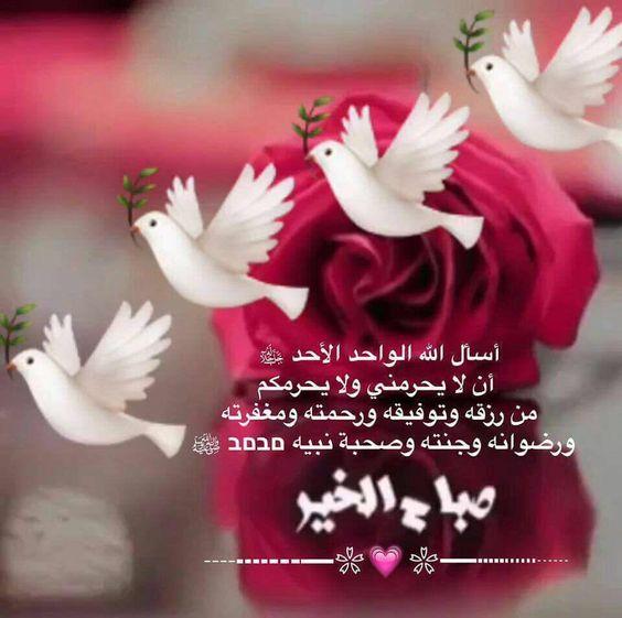 صورة صباح الخير يا حبيبي , كلمات وعبارات صباحية جميلة 5514 3