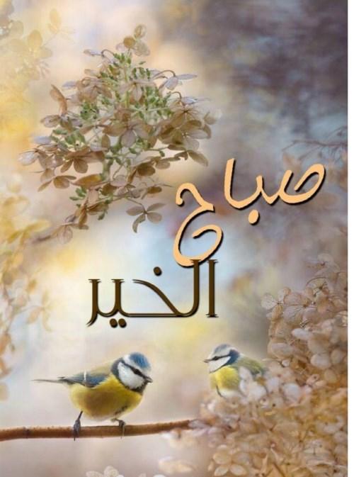 صورة صباح الخير يا حبيبي , كلمات وعبارات صباحية جميلة 5514 5