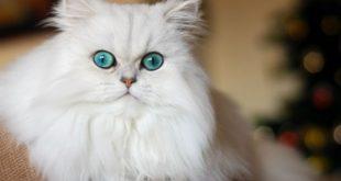 صورة كيفية تربية القطط , كيفية الاعتناء بالقطط