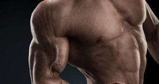 بالصور كم عدد عضلات جسم الانسان , العضلات الموجوده في جسم الانسان 5710 3 310x165