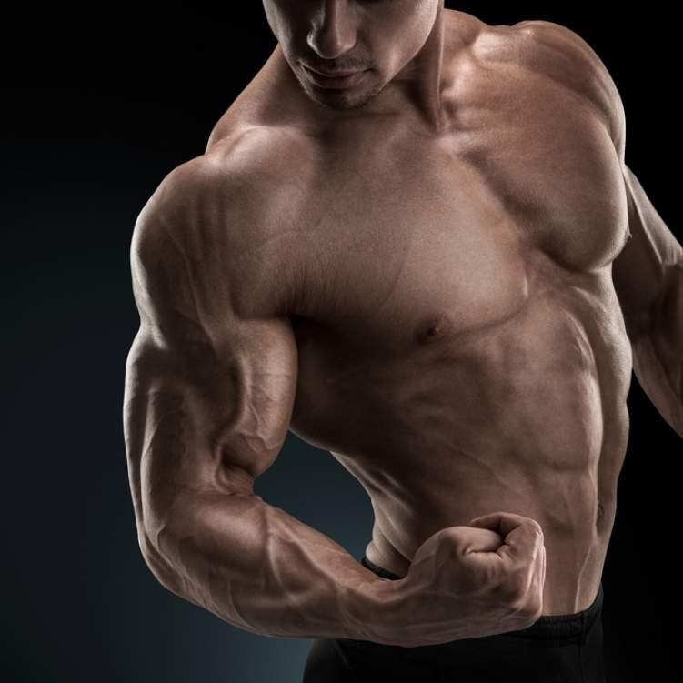كم عدد عضلات جسم الانسان العضلات الموجوده في جسم الانسان عبارات