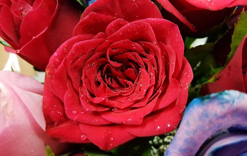 صور ورد رومانسي اجمل اشكال الورد فى اللحظات الرومانسيه عبارات
