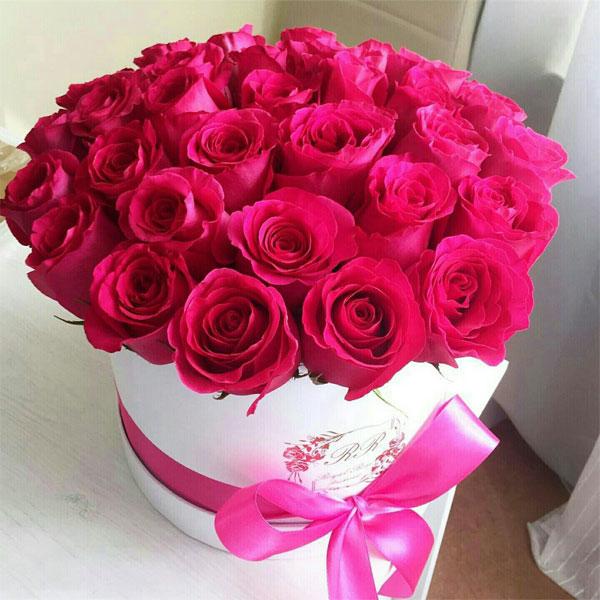 صوره اجمل صور ورد , اروع كلمات وصور عن الورد