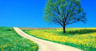 بالصور صور عن الطبيعة , جمال الطبيعه الساحرة 952 11 310x165
