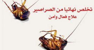 صوره القضاء على الصراصير , طرق للتخلص من حشرات المنزل