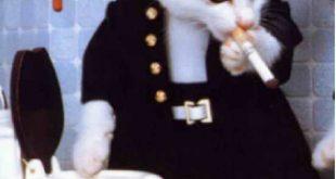 صورة قطط مضحكة , اجمل صور مضحكه