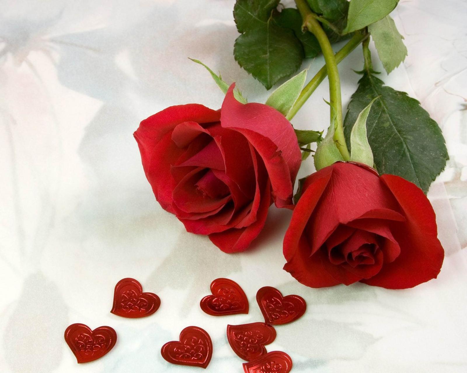 بالصور ورود الحب , ورده الحب الصافي 2182 3