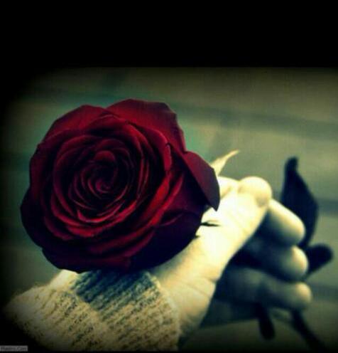 بالصور ورود الحب , ورده الحب الصافي 2182 4