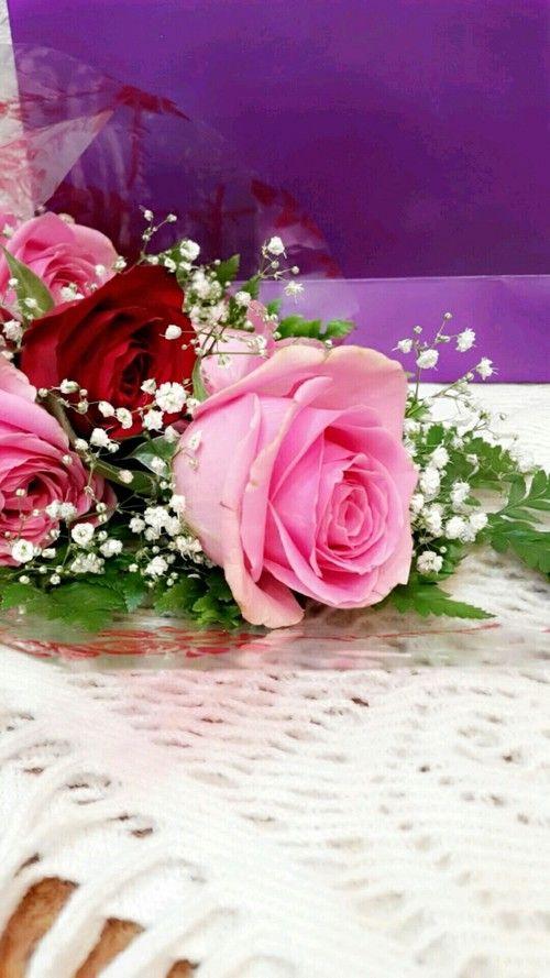 بالصور ورود الحب , ورده الحب الصافي 2182 7