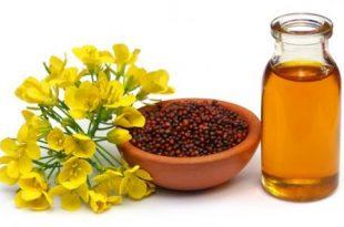 بالصور علاج الربو بالاعشاب , وصفة عشبية للتخلص من حساسية الصدر المزمنة 2960 3 310x205