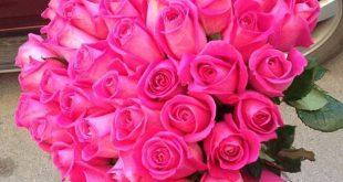 صوره تحميل صور ورد , تنزيل صور زهور جميلة