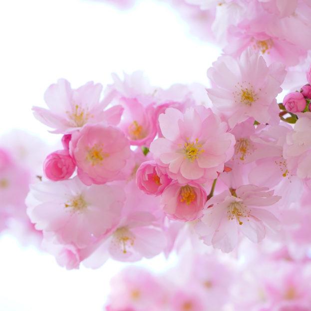 بالصور خلفيات وردي , صور بخلفيات اللون الوردي 6462 4