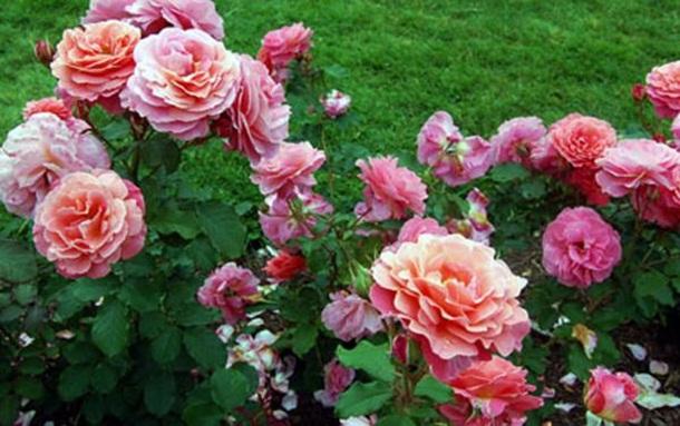 بالصور ازهار جميله , صور ازهار طبيعيه وجميله 6470 1