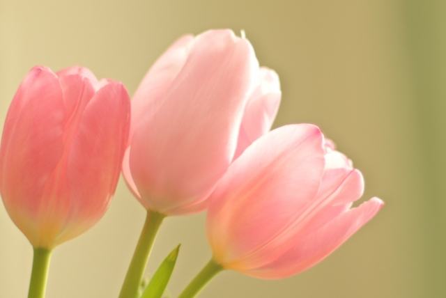 بالصور ازهار جميله , صور ازهار طبيعيه وجميله 6470 10