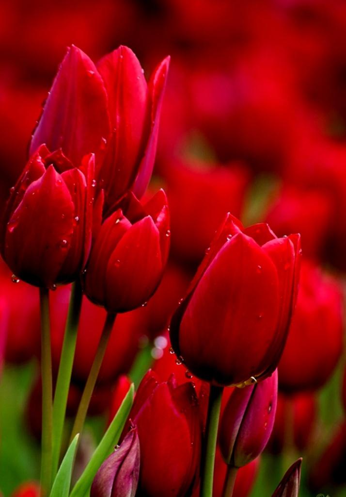 بالصور ازهار جميله , صور ازهار طبيعيه وجميله 6470 2