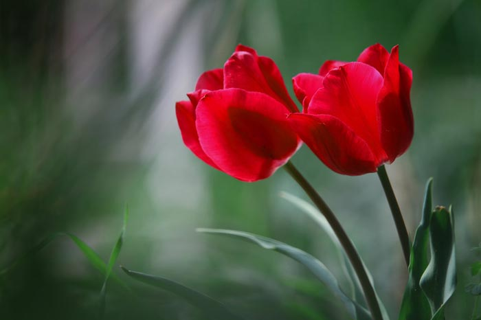 بالصور ازهار جميله , صور ازهار طبيعيه وجميله 6470 4