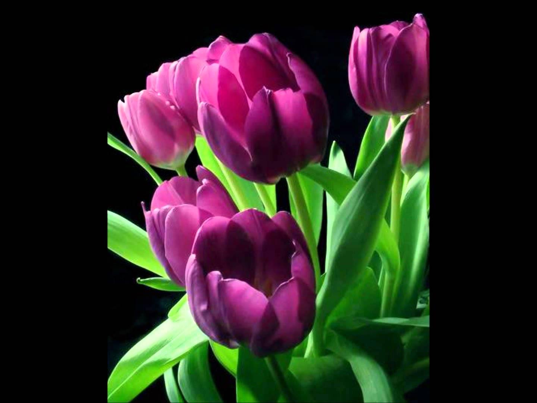 بالصور ازهار جميله , صور ازهار طبيعيه وجميله 6470 8