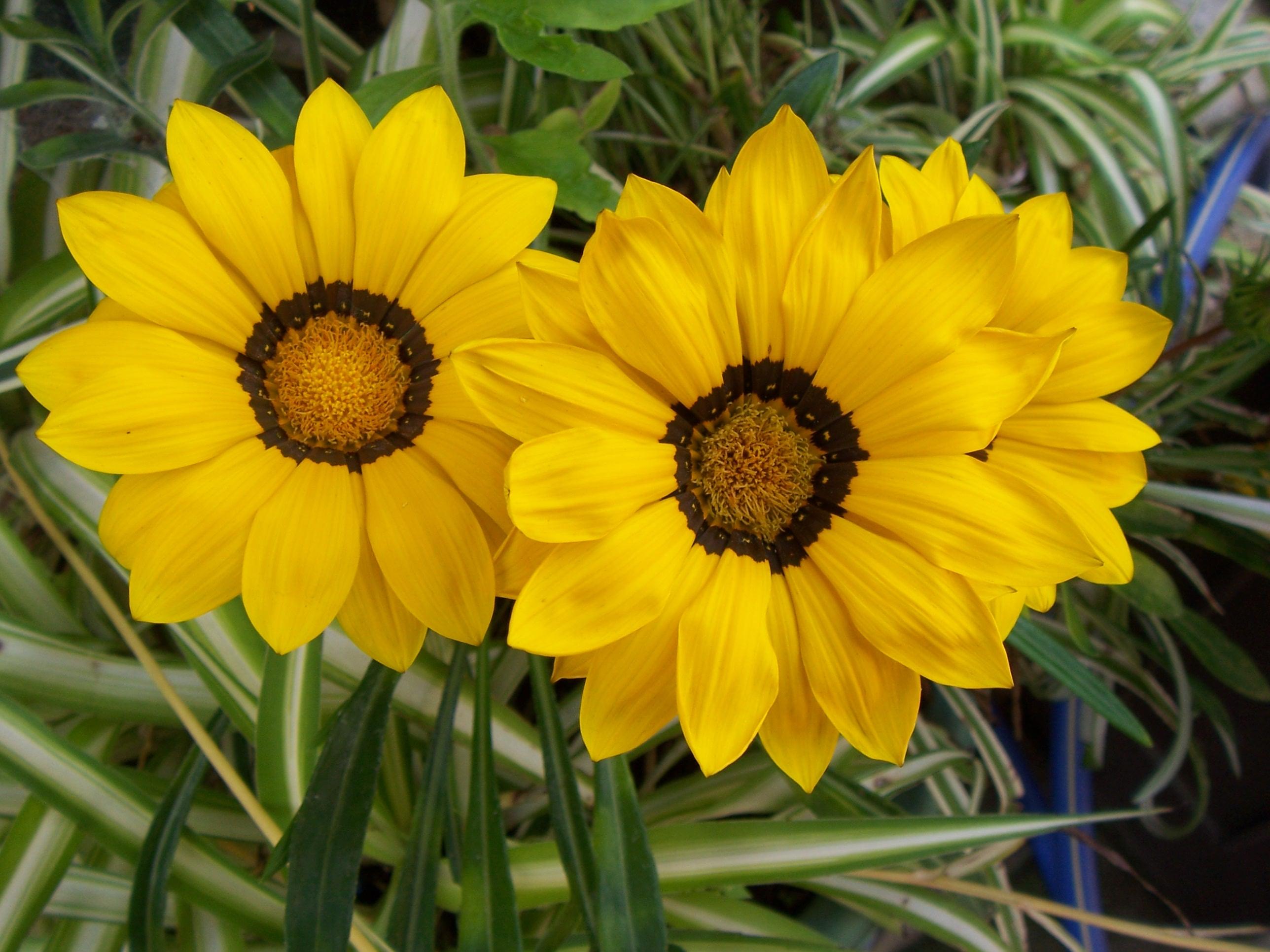 بالصور ازهار جميله , صور ازهار طبيعيه وجميله 6470 9