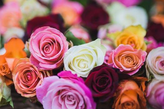 بالصور ازهار جميله , صور ازهار طبيعيه وجميله