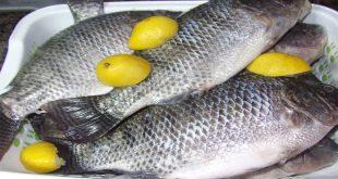 صوره فوائد السمك , فوائد السمك المتعدده