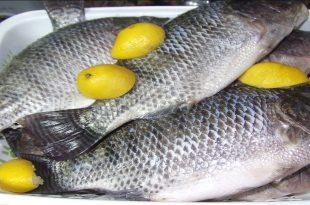 بالصور فوائد السمك , فوائد السمك المتعدده 6471 3 310x205