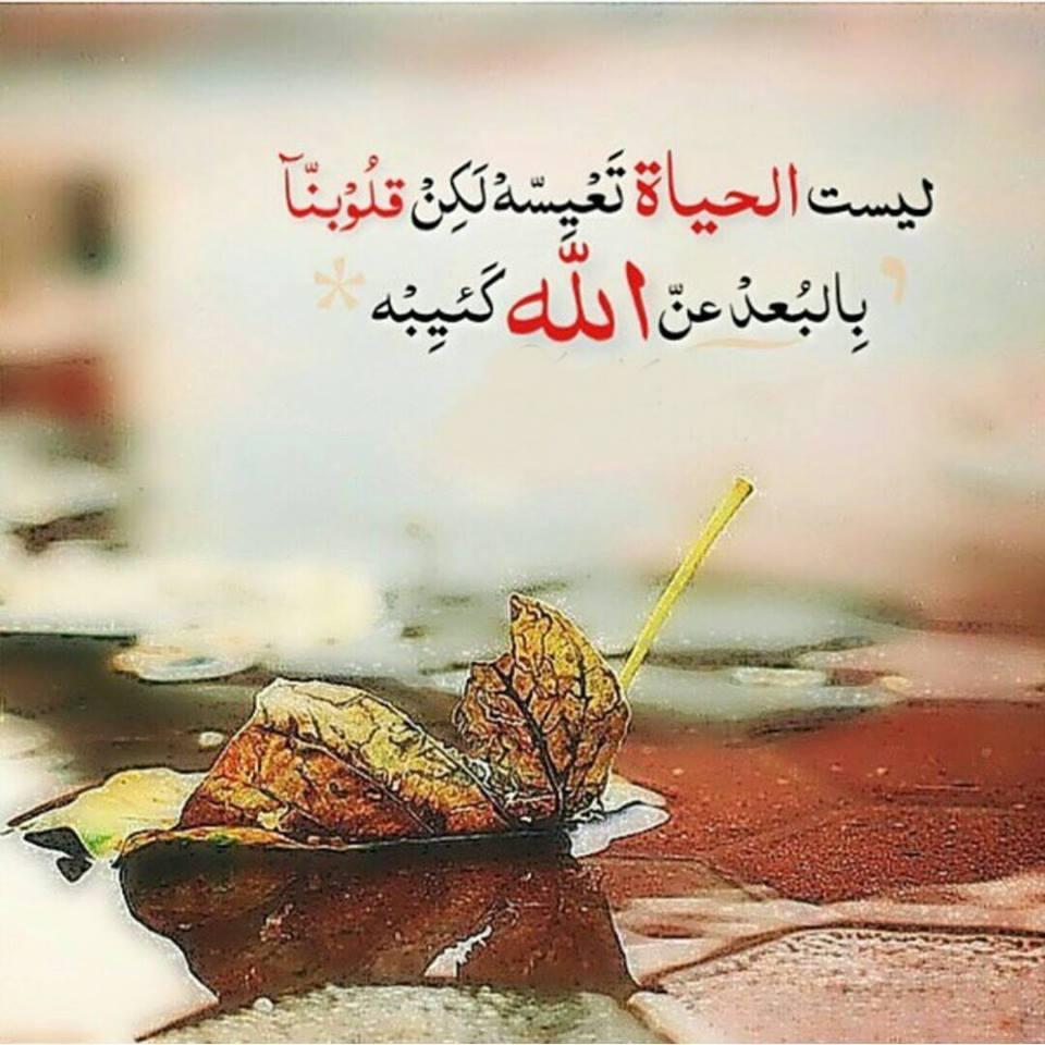 بالصور حكمة الصباح , حكم ومواعظ للصباح 6502 2