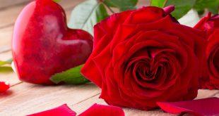 بالصور صور الورد , صور ورود جميله ومختلفه 6712 12 310x165