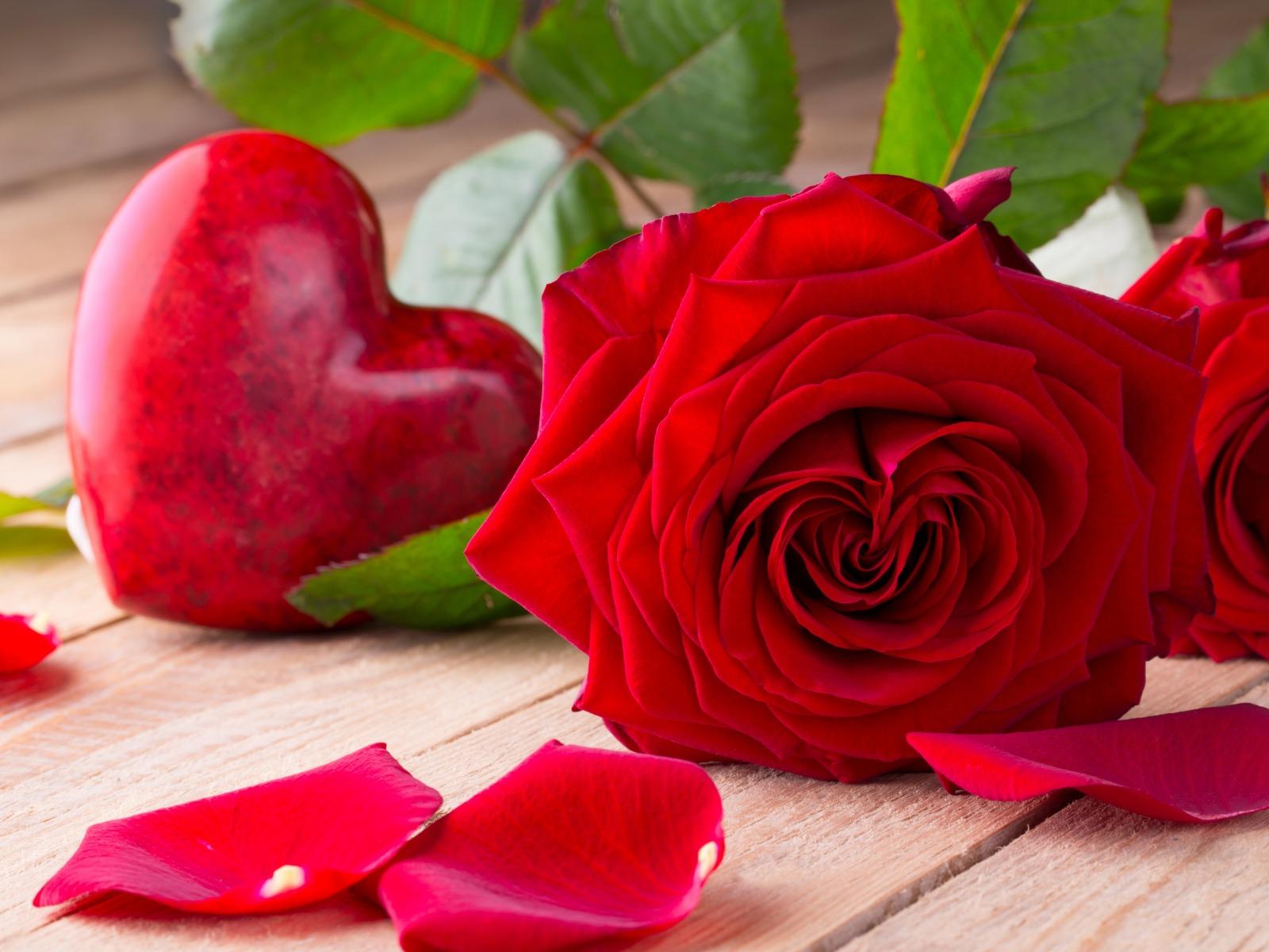 صوره صور الورد , صور ورود جميله ومختلفه