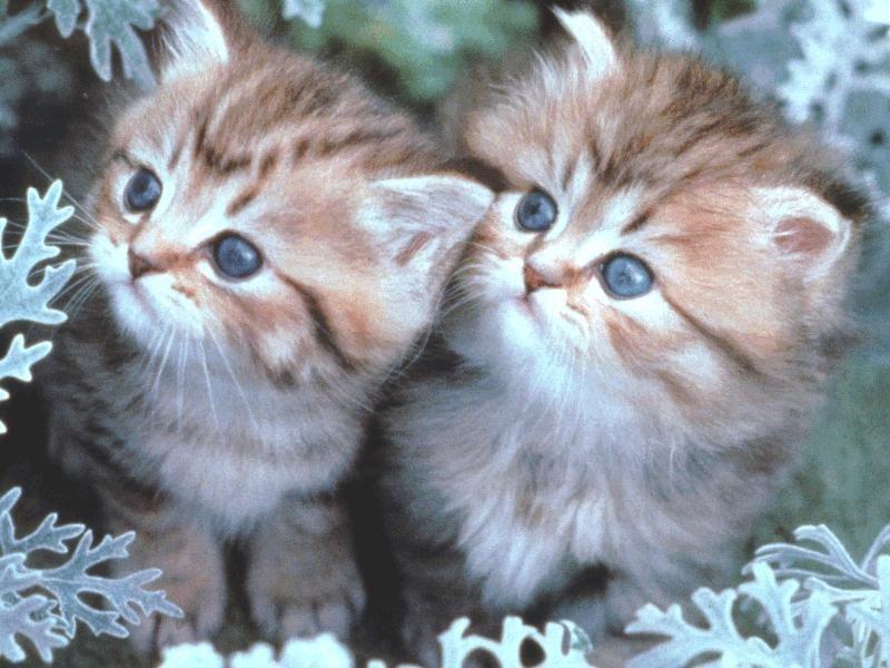 بالصور اجمل الصور للقطط في العالم , صور للقطط من اجمل الصور في العالم 6720 1